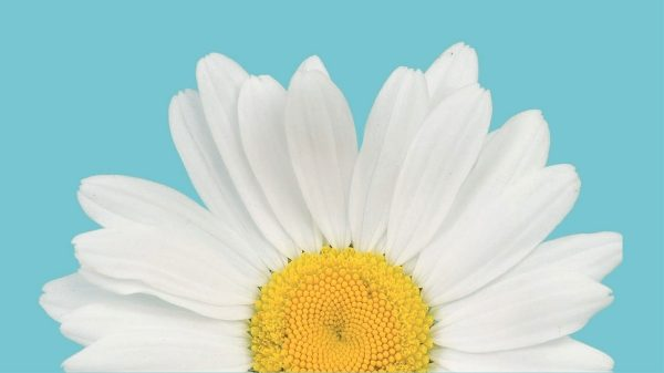 1536x864_kwiatek.jpg.ximg.l_6_m.smart.jpg